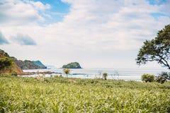 Разбивая волна в ладонях океана и кокоса на пляже Кристаллическая волна в Бали Стоковое Изображение