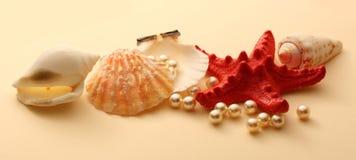 Белые перлы в seashell Стоковое фото RF