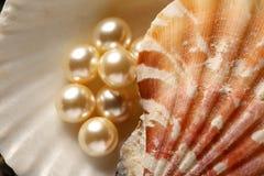 Белые перлы в seashell Стоковая Фотография RF