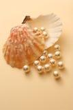 Белые перлы в seashell Стоковые Изображения