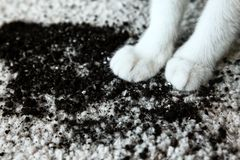 Разбросанная почва на белых лапках ` s ковра и кота Стоковое Изображение RF
