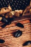 Разбросанные семена подсолнуха стоковые фотографии rf