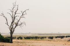 Разбросанные слоны Стоковые Изображения