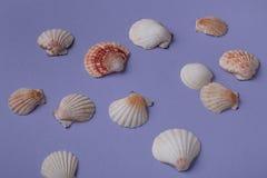 Разбросанные seashells Стоковые Фото