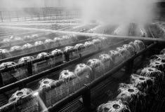 Разбрызгивающие головки стояка водяного охлаждения воды Стоковые Фотографии RF