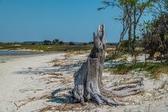 Разваленный пень дерева на пляже стоковое изображение