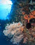 развалина вольности подводная Стоковые Фотографии RF