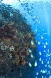 развалина вольности подводная Стоковые Изображения RF