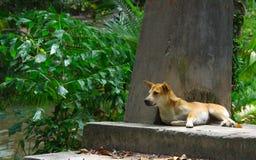 Развалина собаки и виска стоковые фотографии rf