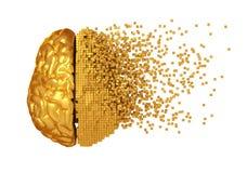 Развал золотого мозга цифров на белой предпосылке Стоковое Фото
