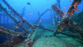 Развалина с рыбами множества сток-видео