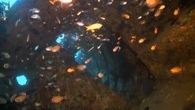Развалина с рыбами множества акции видеоматериалы