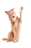 Развевая изолированная собака Стоковая Фотография RF