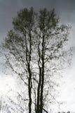 Развевая отражение хоботов деревьев на воде отделывает поверхность Стоковая Фотография RF