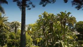 Развевая пальмы на Монако, Cote d'Azur Франции видеоматериал