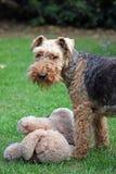 разведенное чисто собаки стоковые фотографии rf