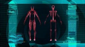 Развертка рентгеновского снимка цифров человеческого тела (HD) иллюстрация вектора