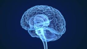 Развертка рентгеновского снимка человеческого мозга, медицински точная видеоматериал