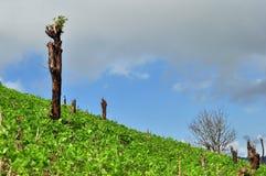 Разветвите на огороде Стоковые Фото