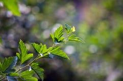 Разветвите с зелеными листьями на запачканной предпосылке Стоковое фото RF