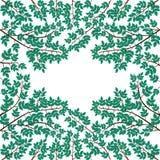 Разветвите с листьями на белой предпосылке Стоковая Фотография RF