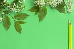 Разветвите с цветками, листьями и покрашенными карандашами Стоковые Изображения