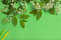 Разветвите с цветками, листьями и покрашенными карандашами Стоковое Фото