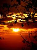 разветвляет заход солнца Стоковые Фото
