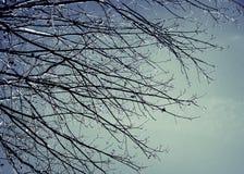 разветвляет зима вала текстуры природы Стоковое Фото