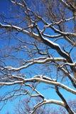 разветвляет зима Стоковое Изображение
