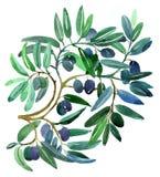 разветвляет оливка Стоковое Изображение