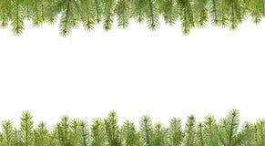 разветвляет рамка firtree Стоковые Фотографии RF