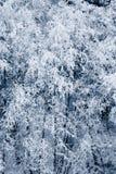 разветвляет снежно стоковое фото