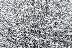 разветвляет снежно стоковое изображение rf