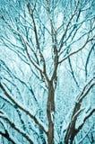 разветвляет снежно стоковая фотография rf