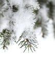 разветвляет снежный спрус стоковые изображения