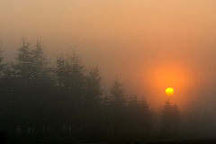 разветвляет утро Стоковые Изображения RF