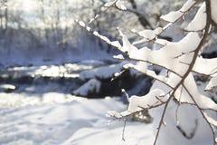 Разветвьте в снежке Стоковые Фотографии RF