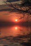 разветвьте над водой вала захода солнца Стоковое фото RF
