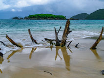 Разветвьте на пляже Стоковые Фото