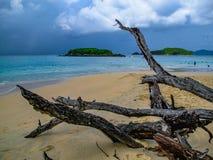 Разветвьте на пляже Стоковое фото RF