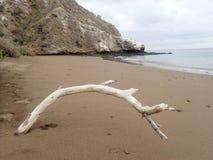 Разветвьте на пляже Стоковое Изображение