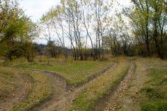 Разветвленные сельские дороги в лесе осени Стоковое Изображение