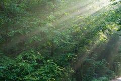 разветвляет восход солнца hornbeam светлый Стоковое фото RF
