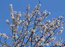 Разветвляет гружёный с цветками стоковое изображение