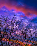 Разветвляет небо Стоковое Фото