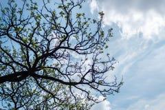 разветвляет небо Стоковые Изображения