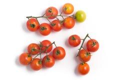 разветвляют томаты вишни Стоковая Фотография RF
