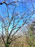 Разветвляя дерево Стоковые Изображения RF