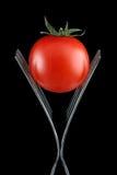 развлетвляет томат 2 Стоковое Изображение RF